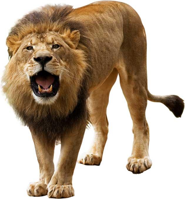 Empresário Leão